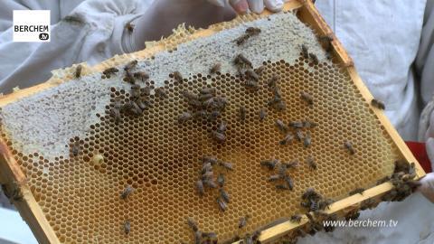 Berchem wordt honingland